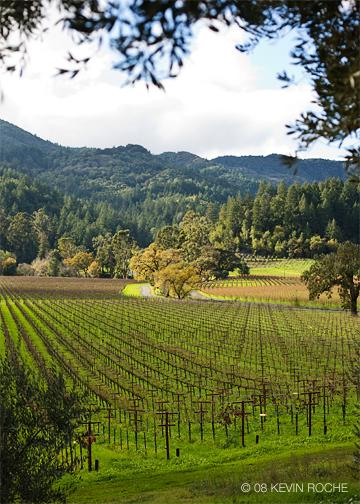 Napa Valley vineyard with wine trellis