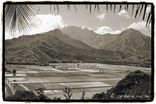 Overview of valley and taro fields at Hanelei
